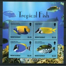 Montserrat 2014 MNH Tropical Fish Angelfish Blue Tang 4v M/S Fishes Stamps