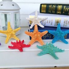 5 pcs Small Colorful Natural Starfish Crafts Decor For Micro Landscape Wedding