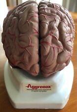 SUPER RARE Aggrenox Brain Model Drug Rep Pharmaceutical Promo Gift Display Ad