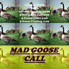 Cd Call, Goose Hunting, Goose Calls, Goose Come, Geese Feeding, Hot Geese ! Call