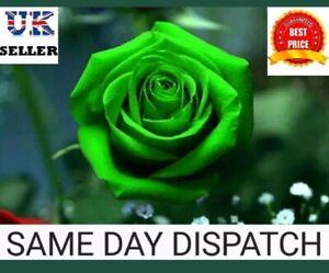 """Rose Seeds - Rose Flower Seeds """"Green""""  U.K. SELLER"""