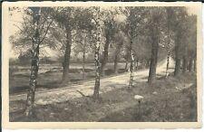 Ansichtskarte Aufnahme einer Allee mit alter Schotterstraße - Fotokarte