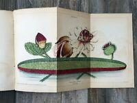 1838 Magazine of ZOOLOGY & BOTANY Volume II Selby / Jardine / Johnston PLATES