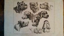 Animals Antique (Pre-1900) Art Prints
