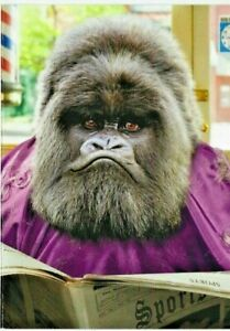Avanti Press Ape Gets Haircut Funny / Humorous Father's Day Card