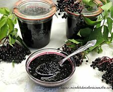 50 seeds ELDERBERRY FRUIT BUSH Shrub Tree Sambucus Nigra Seeds