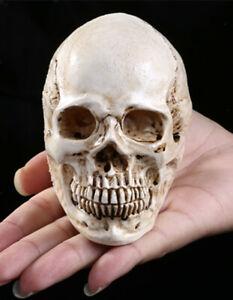 Mini Human Skull Replica Realistic Resin Model Medical Halloween Prop White
