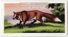 Fox In A Field Vintage Ad Trade Card