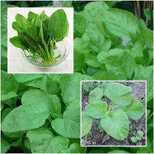 Green Amaranth 10,000 Seeds, Amaranthus blitum, Vegetables Seeds From Thailand