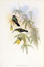 """1990 Vintage HUMMINGBIRD #93 """"SCHREIBERS' HUMMING BIRD"""" GOULD Art Lithograph"""