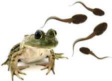 2 Leopard Frog Tadpoles+ Food:Redeem Free Coupon Then Both Shipped to Your Door