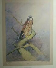 Kestrel Gordon Benningfield Limited Edition Birds Of Prey