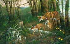 Oak Ridge Renewal - Whitetail Deer - Print by Wildlife Artist Michael Sieve