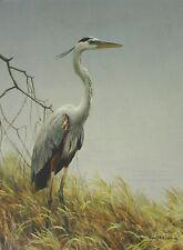 Robert Bateman Art Print Black Crowned Night Heron Pair Great Blue Heron Grasses