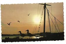 MAINE SUNSET Sailboat Rigging, Seagulls Silhouette Orange Sky Water Postcard ME