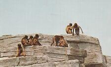 A)  Louisville, KY - Louisville Zoological Gardens - Gelada Baboon Habitat