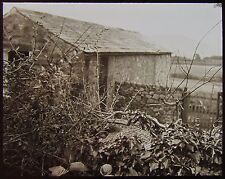 Glass Magic Lantern Slide Hedge & Out Building Gosforth C1890 Photo England