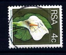 SOUTH AFRICA - SUD AFRICA - 1974 - Camera Kalla (Zantedeschia aethiopica)