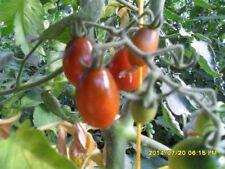 "Ungarische Tomatensamen""Mini Kumato Tomate"",dunkle Cocktail,organische Tomaten"