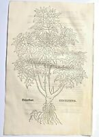 FUCHS  1543 Antique Woodcut Print -  Floral Plant Botanical Herbal *VERY RARE*