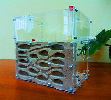 Ant farm ACFK-1. New educational formicarium - ant nest for LIVE ants.