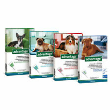 ADVANTAGE x 4 pipettes Ticks and flea treatment Dog antiparasitaire