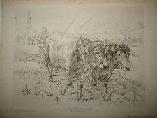 Jean-Paul LAURENS (1838-1921) EAU FORTE ORIGINALE SCENE PAYSAN BOEUF LABOUR