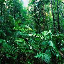 Rainforest 10'x10' CP Backdrop Computer printed Scenic Background YKY-084