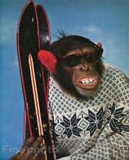 1959 Vintage MONKEY HUMOR Chimpanzee SNOW SKI Alpine Skiing Sports Animal Photo
