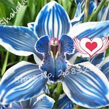 Blue Cymbidium Orchid Rare Bonsai Flower Seeds Balcony Garden Decoration 100 pcs