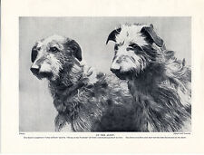 SCOTTISH DEERHOUND TWO NAMED DOGS OLD ORIGINAL 1934 DOG PRINT PAGE