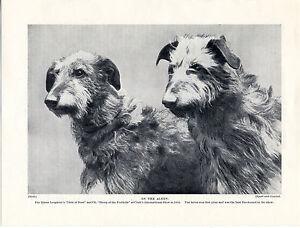 SCOTTISH DEERHOUND TWO NAMED DOGS OLD ORIGINAL 1934 DOG PRINT PAGE
