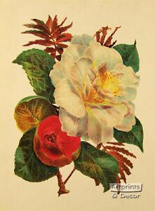 Victorian Floral II (: Art Print of Vintage Art :) (9 x 12)