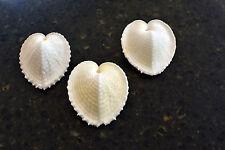 "3 Beautiful White True Heart Cockle Shells (1 -1.5"") Beach Wedding Crafts Decor"