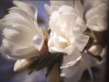 7 x große Fotografien, Bilder, Fotokunst,Poster, Blumen, Natur 70x50 cm Neu