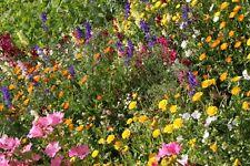 Samenmischung Japanischer Blumenrasen, Blumenwiese, Sommerblumen, Bienenweide