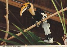 """*Canada Postcard-""""The Concave Hornbill...Metro Toronto Zoo"""" ...Ontario-"""