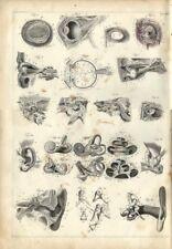 Stampa antica ANATOMIA OCCHIO ORECCHIO medicina 1850 Old Antique print