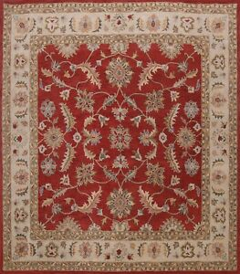 Traditional Floral 10ft Square Red/Ivory Agra Oriental Area Rug Hand-Tufted Wool