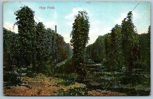 Antique Postcard~ Hop Field~ a620