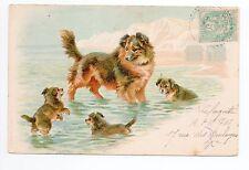 Animal CHIEN Chiens DOG dogs 50 carte illustrateur chienne chiots baignade