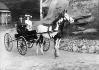Antique Photo ... Horse & Buggy Early 1900's ... Photo Print 5x7