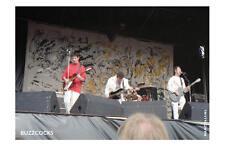 Buzzcocks, Pukkelpop Festival, Hechtel, Belgium, 1990 - signed verso