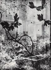 "1950 Vintage Heinz Hajek-Halke Surreal ""Paul Klee's Greenhouse"" Photogram Art"