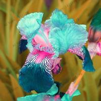 Varieties Perennial Iris Orchid Flowers Bonsai Plants Home Garden 100 PCS Seeds