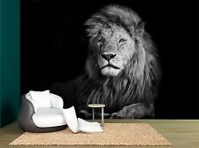 Black And White Lion Photo Wallpaper Wall Mural GIANT WALL DECOR