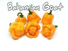 (25+) Bahamian Goat Pepper Seeds