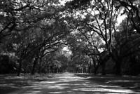 Canopy of Trees Savannah Georgia Street B&W Photo Art Print Poster 24x36 inch