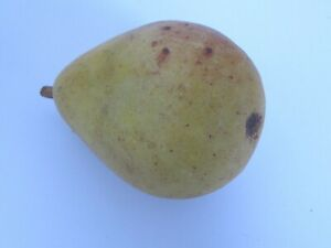 Vintage Italian Marble Fruit Pear Red Blush Wood Stem