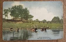 Vintage Ny New York Zoological Park Post Card Elk Bathing 214, B Postcard
